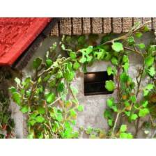 Ziterdes - Virginia creeper Laser-Cut minis, 12 plants