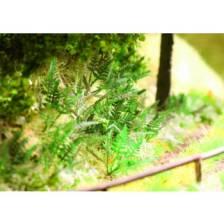 Ziterdes - Farn 9 Laser-Cut Pflanzen